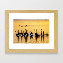 Silhouette of Pink Flamingos Framed Art Print