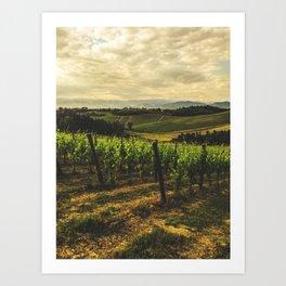 vineyard at sunset Art Print