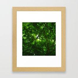 Deep Green Forest Framed Art Print