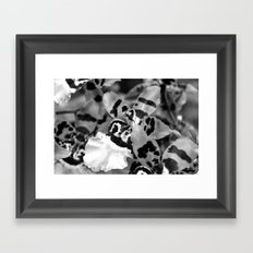 Leopard Orchid black and white Framed Art Print