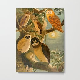 Album de aves amazonicas - Emil August Göldi - 1900 Amazon Animals Exotic Owls Metal Print