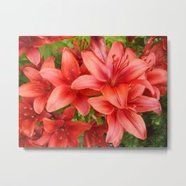 """""""A Gathering of Lilies"""" - 5 [D4471~15] Metal Print"""