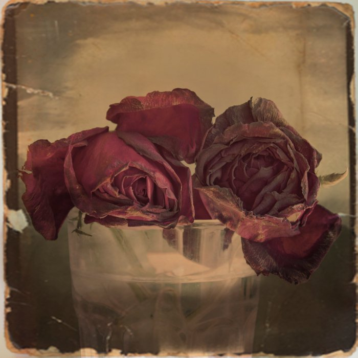 The veins of Roses Comforters