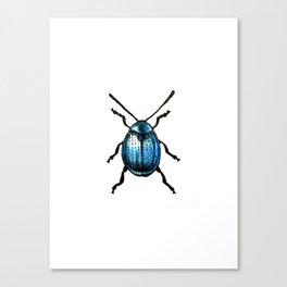 Leaf Beetle Canvas Print