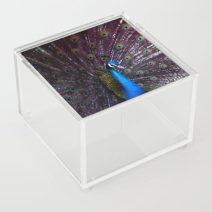 A Royal Tail Acrylic Box