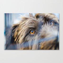 Dog's eye Canvas Print