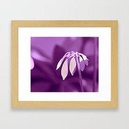 Schefflera Framed Art Print