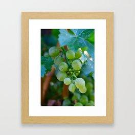 Sprig of Grapes Framed Art Print