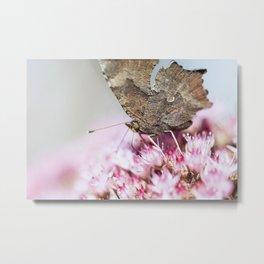 Tortoiseshell Butterfly Metal Print
