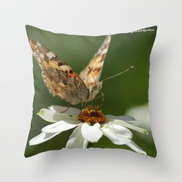 Butterfly macro photography Throw Pillow