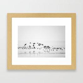Wading birds in Flight Framed Art Print