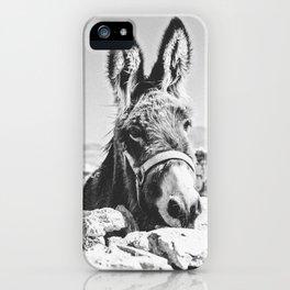 DONKEY / Spain iPhone Case