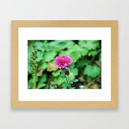 Pink Flower, Rainy Day Framed Art Print