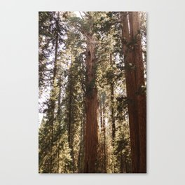 Sequoia National Park XIV Canvas Print