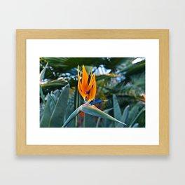 Magic Bird of Paradise Framed Art Print