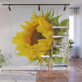 sunflower, girassol Wall Mural