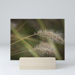 Dew on Ornamental Grass, No. 1 Mini Art Print