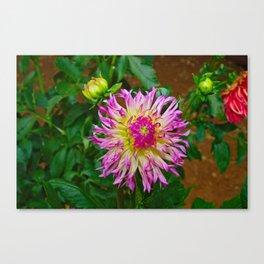 A Purple Tipped Dahlia Flower Canvas Print