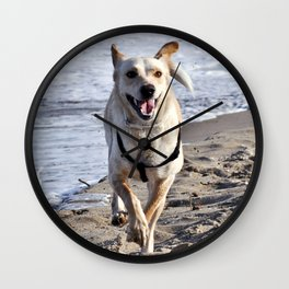 WHITE DOG in SICILY Wall Clock