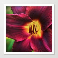 burgundy Canvas Prints featuring Burgundy Satin by hewnly
