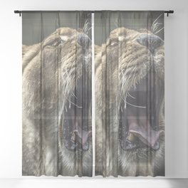LIONESS YAWNING Sheer Curtain