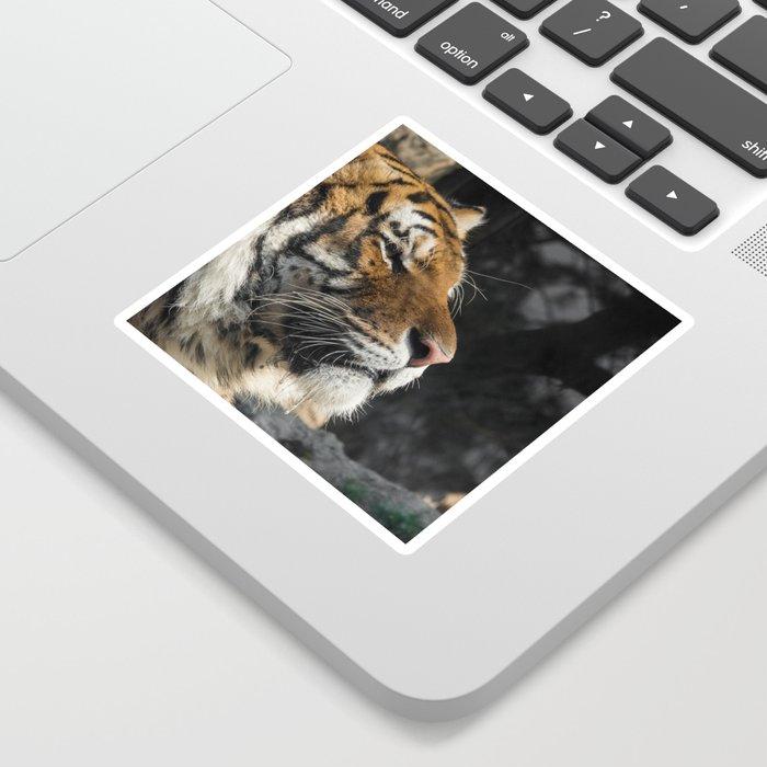 Portrait of a Siberian Tiger Sticker