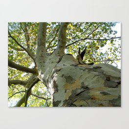 Unique Tree Canvas Print