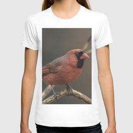 Red cardinal 7686 T-shirt