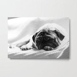 Lazy Day Pug Metal Print