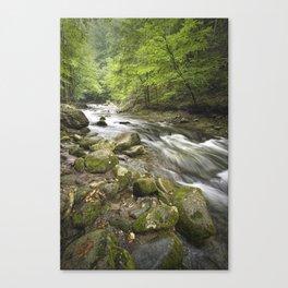 Mountain Stream in the Smoky Mountains Canvas Print