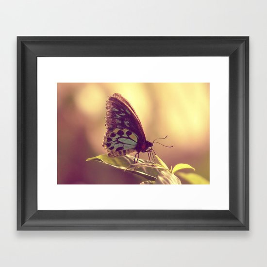 Butterfly 02 Framed Art Print