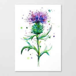 Watercolor Thistle Canvas Print
