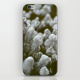 Close up of wild cotton in the field iPhone Skin