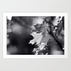 Winter Oak in Black and White Art Print