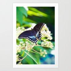 River Run Butterfly Art Print