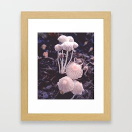 Fungus Blush Framed Art Print