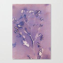 Cyanotype No. 13 Canvas Print
