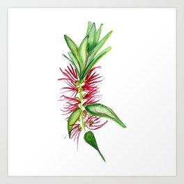 Australian Native Bottlebrush Flower Art Print