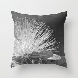 Calliandra Flower Throw Pillow