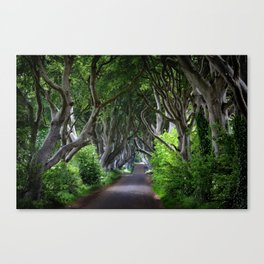 Dark Hedges, Northern Ireland. Canvas Print