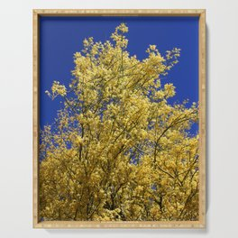 Palo Verde Yellow Blooms Serving Tray