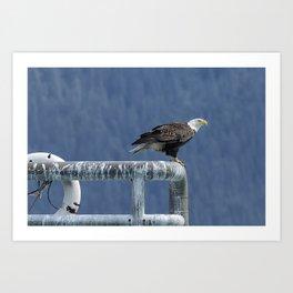 Bald Eagle of Resurrection Bay, No. 3 Art Print