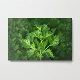 Close picture of parsley Metal Print