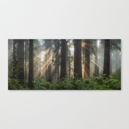 REDWOOD WIDE Canvas Print