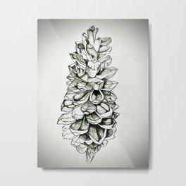 Sugar Pine Cone Metal Print