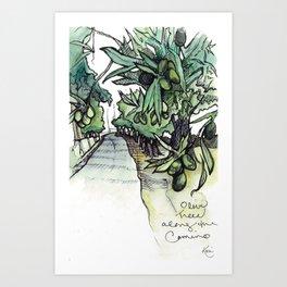 Olive Trees on the Camino Portugués  Art Print