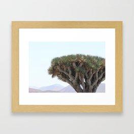 Trees of Lanzarote Framed Art Print
