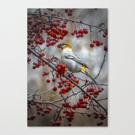 Pine Grosbeak Canvas Print