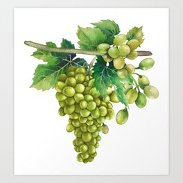 Watercolor bunches of white grapes hanging on the branch Art Print