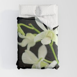 White Orchid dendrobium Phalanopsis Comforters